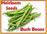 buy Green Bean Seeds-Heirloom variety-Blue Lake Bush Bean Planting Seeds-50+ Seeds-USA grown and Shipped from USA now, new 2018-2017 bestseller, review and Photo, best price $7.98