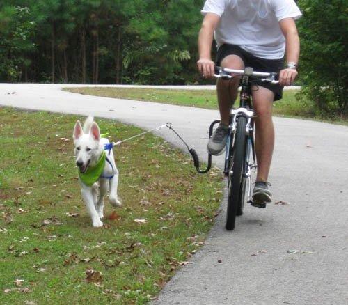 Springer Bike Attachment by Springer AS