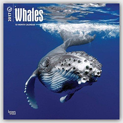2017 Monthly Wall Calendar - Whales