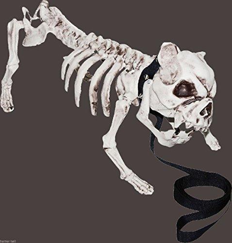 Realistic Dead Pet ZOMBIE SKELETON PIT BULL DOG Creepy Halloween Prop (Punk Skater Halloween Costume)