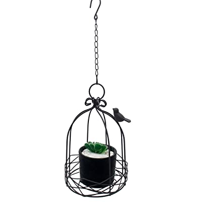 Rustic Metal Wire Birdcage Hanging Planter Wall Plant Holder for Outdoor Garden Decor: Garden & Outdoor