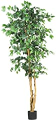Unlike the real Focus tree (which is finicky and practically leafless in almost any home light conditions)., our Focus tree is eternally verdant and deep green with 1008 individual leaves on several sturdy branches. Measuring six feet in heig...
