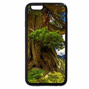 iPhone 6S / iPhone 6 Case (Black) Century-old tree
