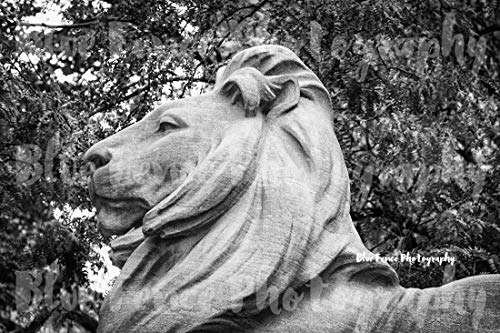 (New York Public Library Lion, Closeup, 42nd Street, Architectural Photography, Black & White, New York City, NY Print, Manhattan, Wall Art, Sizes Available from 5x7 to)