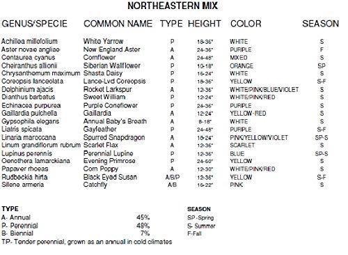 Non GMO Bulk Northeast Wildflower Seed Mix 425,000 Seeds (1/2 lb) by Dirt Goddess Super Seeds (Image #4)