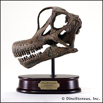 (Brachiosaurus Dinosaur Skull Model 1/4 Scale)