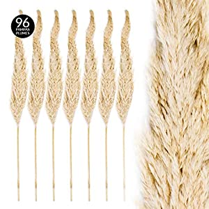 Koyal Wholesale Pampas Grass 63