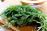 Green's Gardens Rare Heirloom 100 Dill Seeds(Anethum graveolens)Edible Landscaping: Eat Your Beautiful Yard Herb