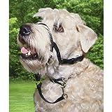Holt Walking Headcollar – Size 2 in Black, My Pet Supplies