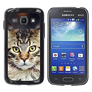 YiPhone /// Prima de resorte delgada de la cubierta del caso de Shell Armor - Maine Coon Norwegian Forest Cat - Samsung Galaxy Ace 3 GT-S7270 GT-S7275 GT-S7272
