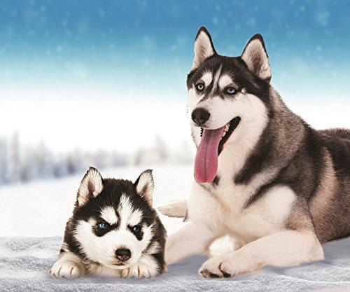 (Husky Dog Fleece Throw Blanket 50