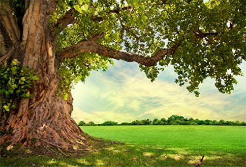 CSFOTO 10x7ft Background for Huge Green Tree Branch Photography Backdrop Rural Scenery Field Spring Summer Country Scene Picnic Leisure Vacation Tour Holiday Photo Studio Props Vinyl Wallpaper ()