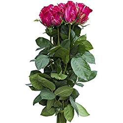 24 Stems - Fresh Cut Pink Intuition Rose (Exclusive)Bouquet from Flower Explosion, for Valentine's Day