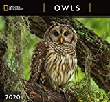 National Geographic Owls 2020 Wall Calendar