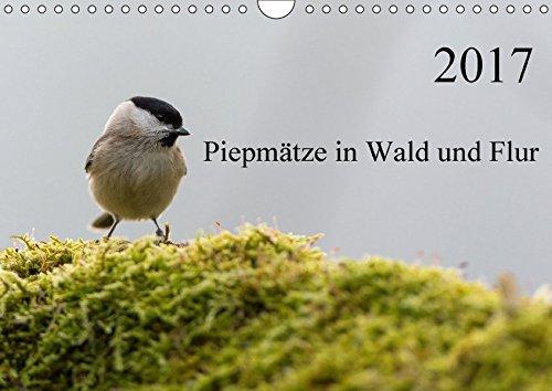 Piepmätze in Wald und Flur (Wandkalender 2017 DIN A4 quer): Heimische Singvögel in ihrem natürlichen Umfeld (Monatskalender, 14 Seiten ) (CALVENDO Tiere)