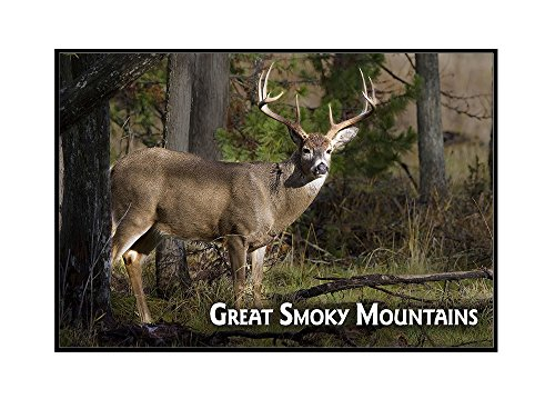 Great Smoky Mountains, Tennessee - White-tailed Deer Buck (24x16 Framed Gallery Wrapped Stretched Canvas) Smoky Mountain Deer