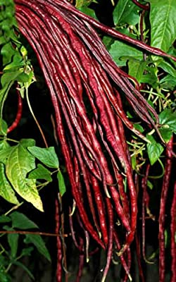 Red Noodle Yard Long Beans 25+ seeds