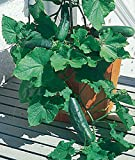 David's Garden Seeds Cucumber Slicing Spacemaster SL9321 (Green) 50 Non-GMO, Heirloom Seeds