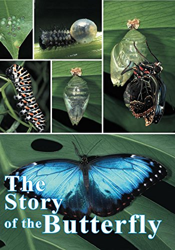 (Story of the Butterfly, The )