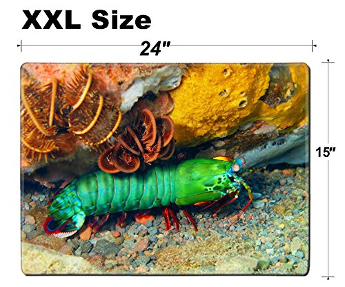 Luxlady Extra Large Mouse Pad XXL Extended Non-Slip Rubber Gaming Mousepad 24x15 Inch, 3mm thick Stitched Edge Desk Mat IMAGE ID: 34031412 Mantis shrimp Island Bali Tulamben