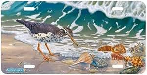 Amazon Com Beach Bum Sandpiper Art Print License Plate