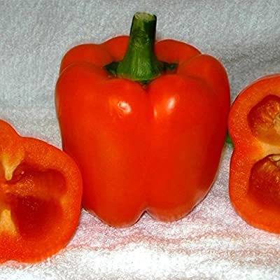 Coral Belle, Sweet Pepper Garden Seeds - Non-GMO, Orange Bell Pepper Vegetable Gardening Seed by Mountain Valley