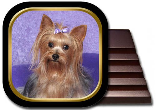 (Yorkshire Terrier Coaster Set)