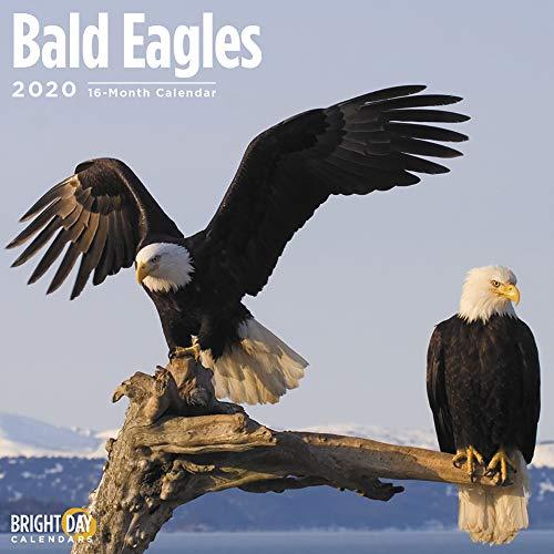 2020 American Eagle - Birds Wall Calendars by Bright Day Calendars 16 Month Wall Calendar 12 x 12 Inches (Bald Eagles 2020)