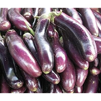 Philippine Agriculture Eggplant Seeds Talong Tagalog : Garden & Outdoor