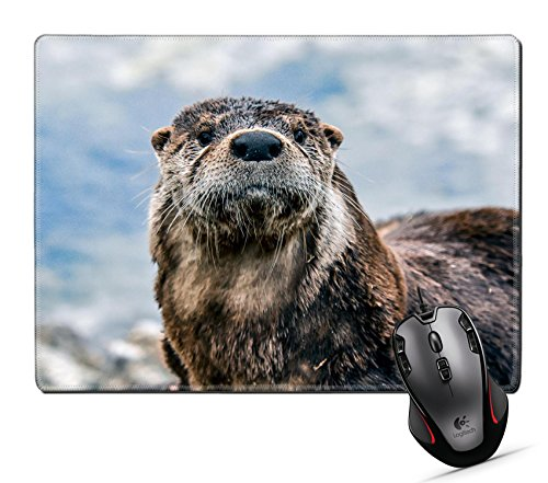 """Price comparison product image Custom Mouse Pad,MSD 9.8""""x7.9"""" Unique Printed Mouse Mat Design for fur mammal animal water cute wildlife wild nature wet otter river endangered head swimming zoo"""
