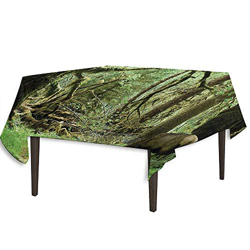 kangkaishi Rainforest Detachable Washable Tablecloth Roosevelt Elk in Rainforest Wildlife National Park Washington Antlers Theme Great for Parties Festivals etc. W70 x L70 Inch Green Brown -