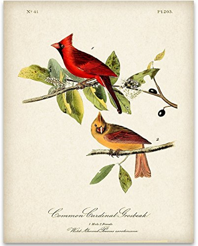 Cardinal Feather - Two Cardinals Art Print - 11x14 Unframed Art Print - Great Home Decor and a Great Gift for Bird Watchers