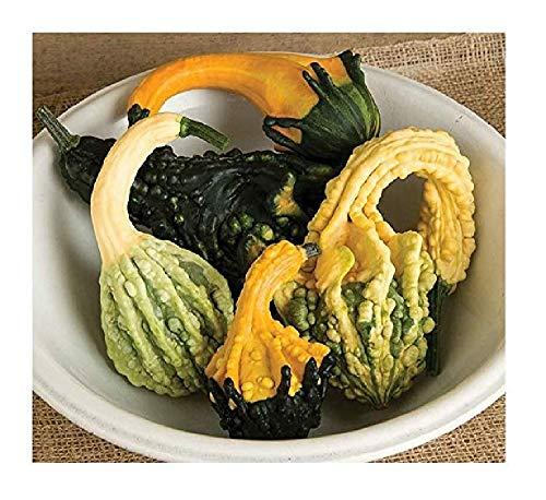- David's Garden Seeds Gourd Autumn Wings Blend SL7521 (Multi) 50 Non-GMO, Open Pollinated Seeds