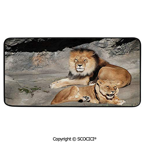 Rectangular Area Rug Super Soft Living Room Bedroom Carpet Rectangle Mat, Black Edging, Washable,Zoo,Male and Female Lions Basking in The Sun Wild Cats Habitat King,39