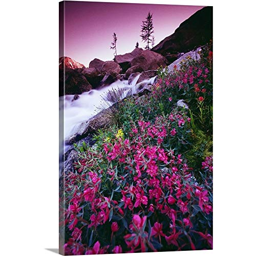 GREATBIGCANVAS Gallery-Wrapped Canvas Entitled Wildflowers, Bugaboo Provincial Park, British Columbia, Canada by Bilder Buch 24