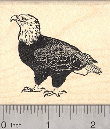 Bald Eagle Rubber Stamp, Raptor, Bird of Prey