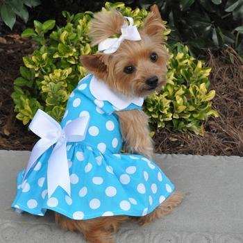 Blue Polka Dot Dress w/Leach & D-Ring (X-Small) by Doggie Design
