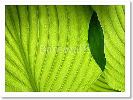 Leaves Paper Print Wall Art - bwc75594 (10in. x 13in.) Barewalls Leaf