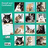 Cats on Catnip Wall Calendar 2021