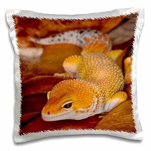 3dRose pc_73099_1 Leopard Gecko morph, Lizard, Pakistan-A...