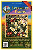 Everwilde Farms - 2000 English Daisy Wildflower Seeds - Gold Vault Jumbo Seed Packet