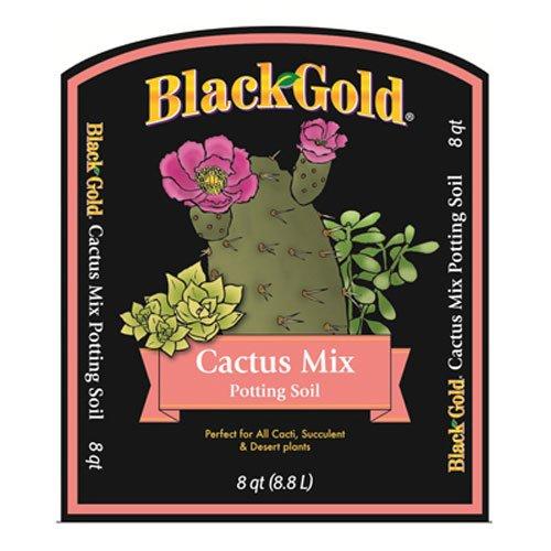 Horticulture 1410602 Q08P Black Gold Cactus product image