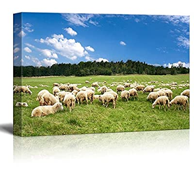 Canvas Prints Wall Art - A Lot of Sheep on The Beautiful Green Meadow Under Blue Sunny Sky | Modern Wall Decor/Home Art Stretched Gallery Canvas Wrap Giclee Print & Ready to Hang - 16