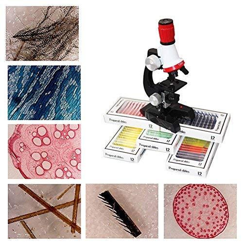 Per 12pcs Children Prepared Microscope Slides Set Plastic Animal Plant Specimen Slide For Kids Toddlers Basic Biological Science Education