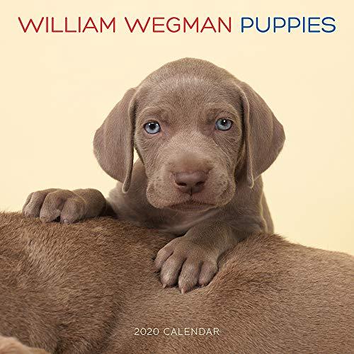 (William Wegman Puppies 2020 Wall Calendar)