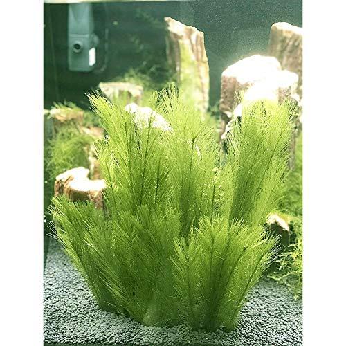 Plantas artificiales de plástico para acuario, 3 piezas, fabricadas con telas de seda, plantas de acuario de simulación viva, plantas de acuario, ...