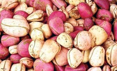 African Kola Nut - All Natural, Organic Bizzy Kola Nut Powder 4 oz