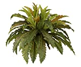 House of Silk Flowers Artificial Birds Nest Fern