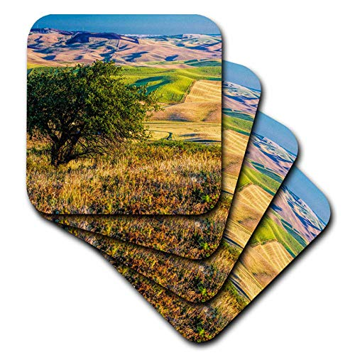 3dRose Danita Delimont - Washington - USA, Washington State, Palouse, Apple Tree overlooking rolling hills - set of 8 Coasters - Soft (cst_315199_2)
