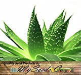 20 x Aloe Seeds Mix - Excellent House Plants succulent For Greenhouse, Indoor home - Includes ALOE...